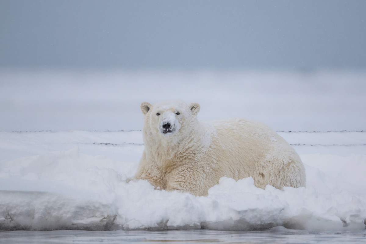 Arctic Alaska Photo Small Group Tours