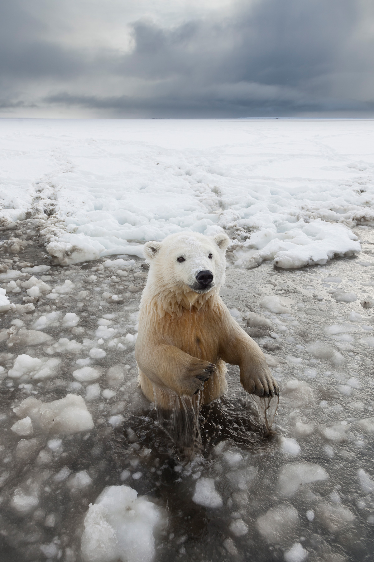 Polar Bears Photography Tour