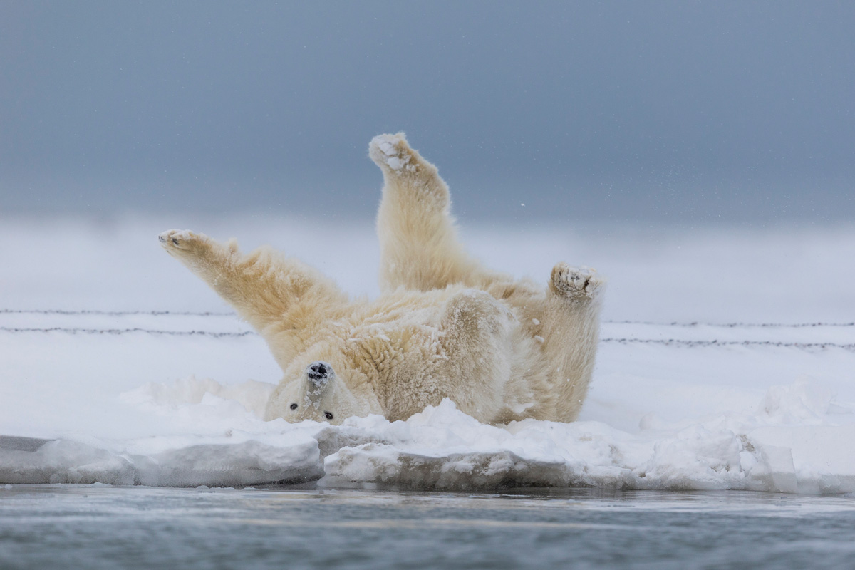 Alaska Arctic Photography