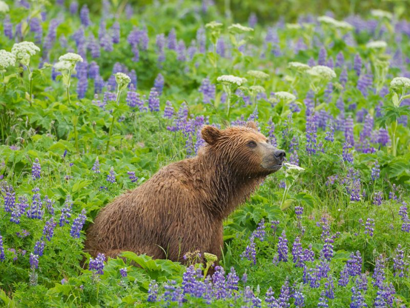 Alaska Wildlife Photo