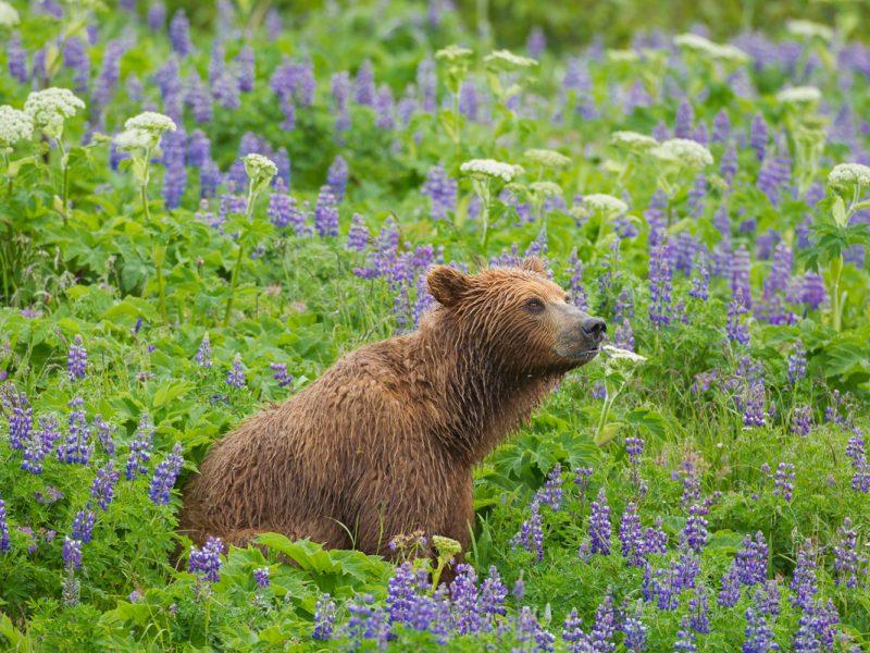 Alaska Wildlife Photo