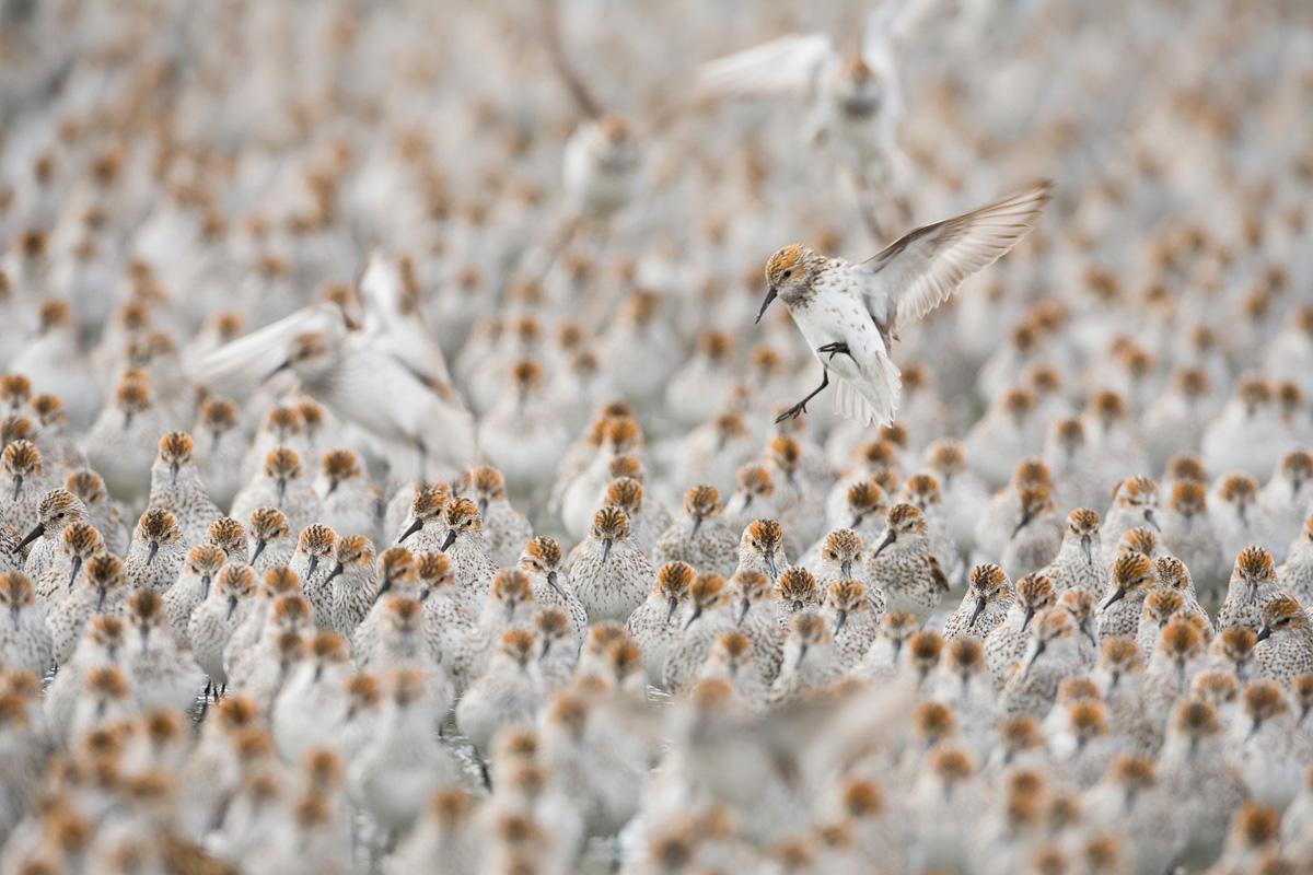 Alaska Wildlife Spring Photo Tours