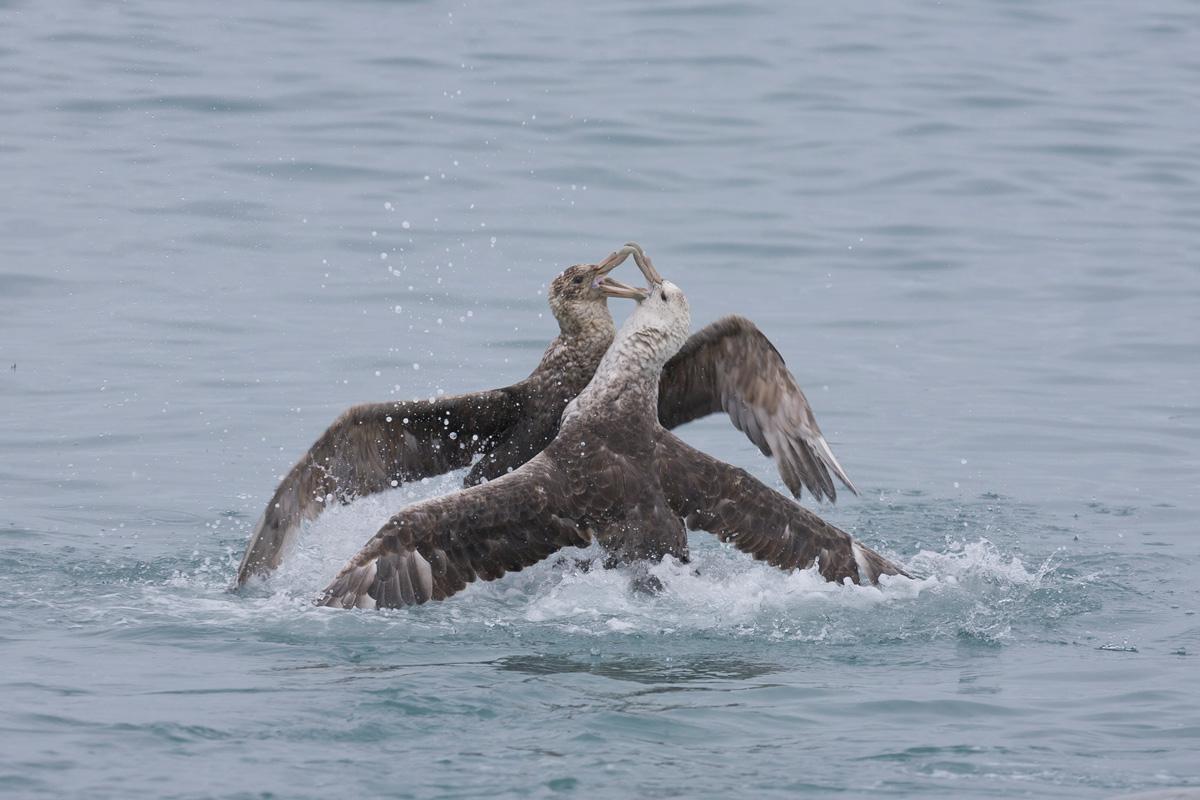 Antarctic Wildlife Photo Tours