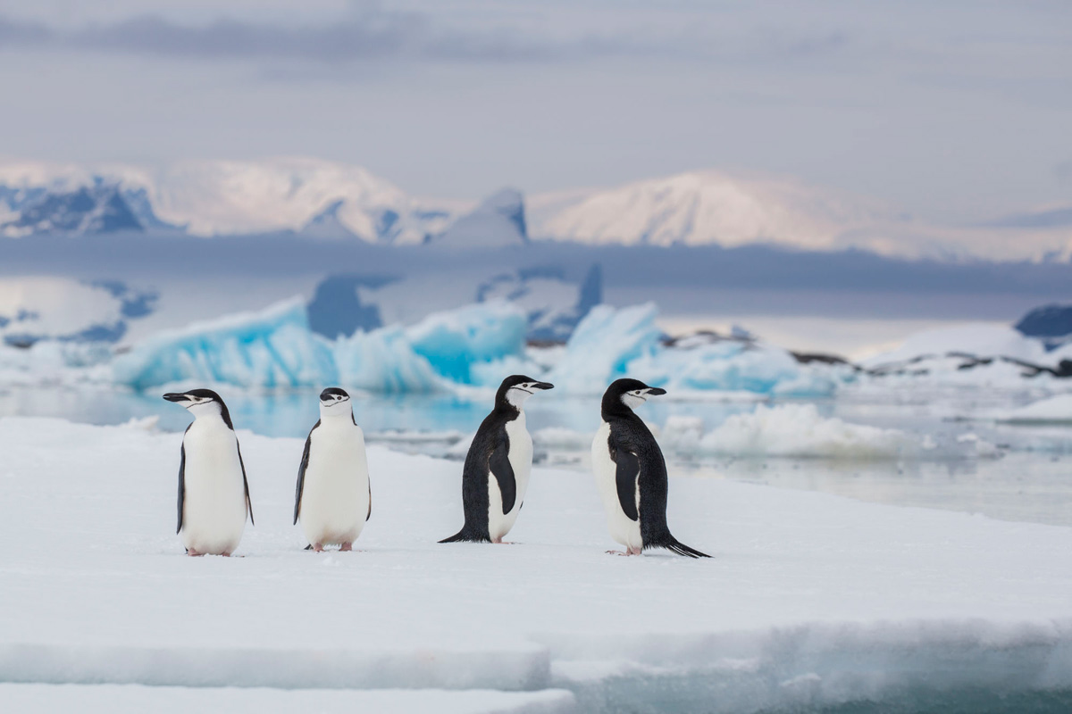 Falkland Island Seven Island Circuit Tour
