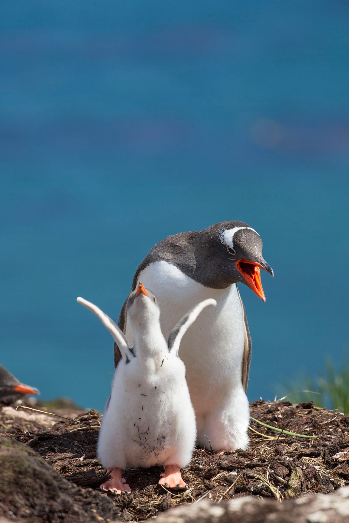 Falkland Islands Antarctica Photography Tours