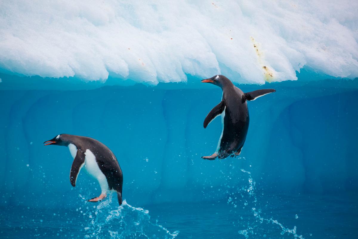 Falkland Islands Antarctica Tour