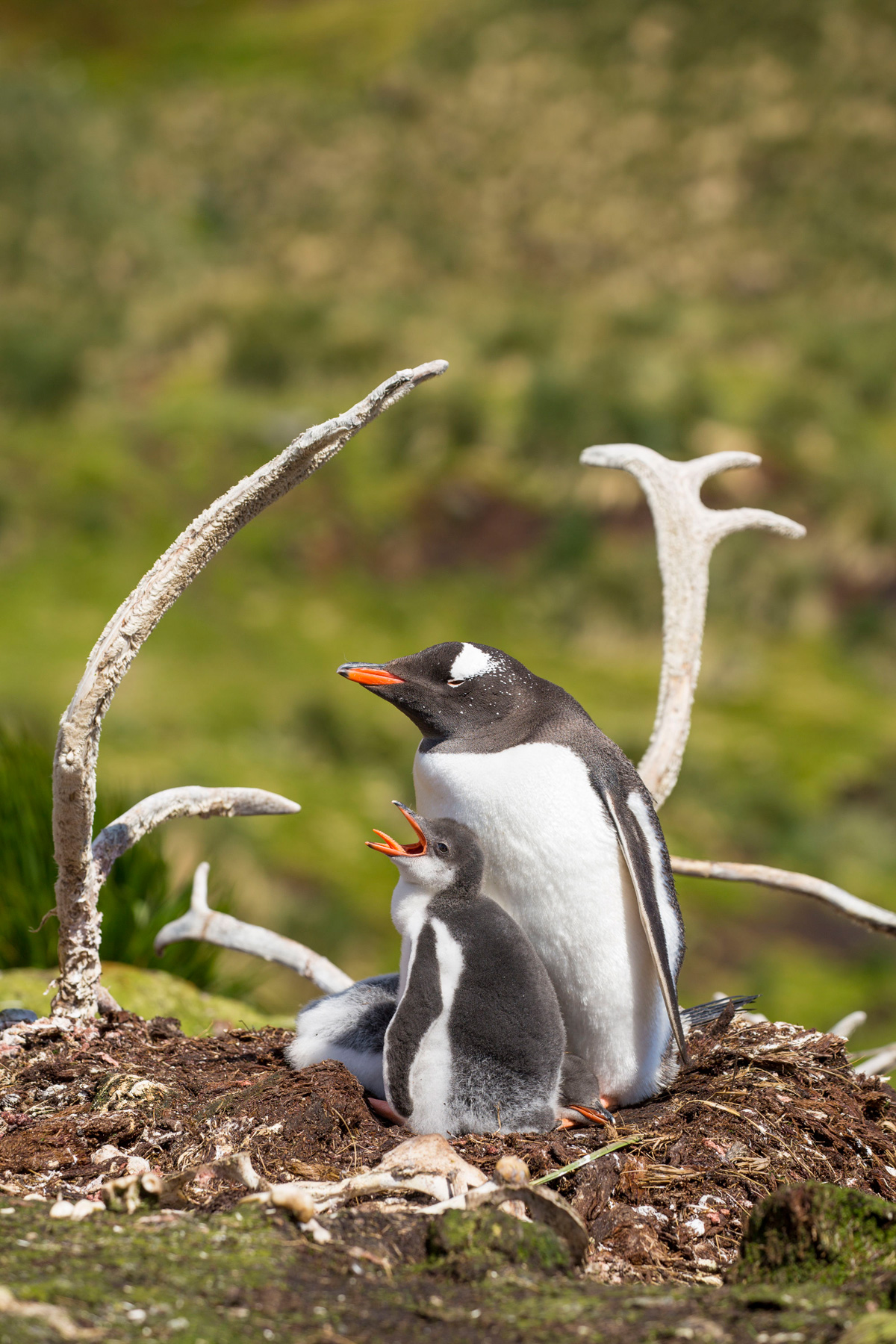 Falkland Islands Seven Island Circuit