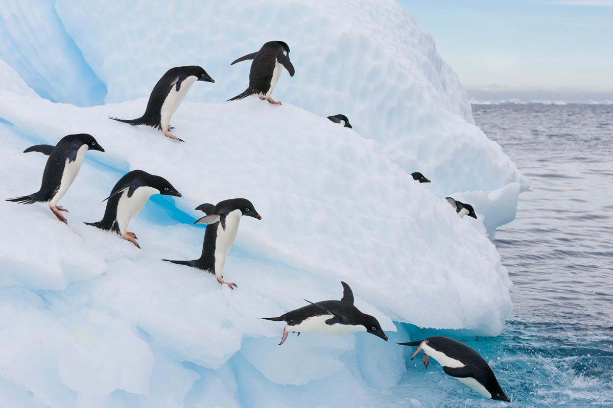 Falkland Islands Wildlife Tour